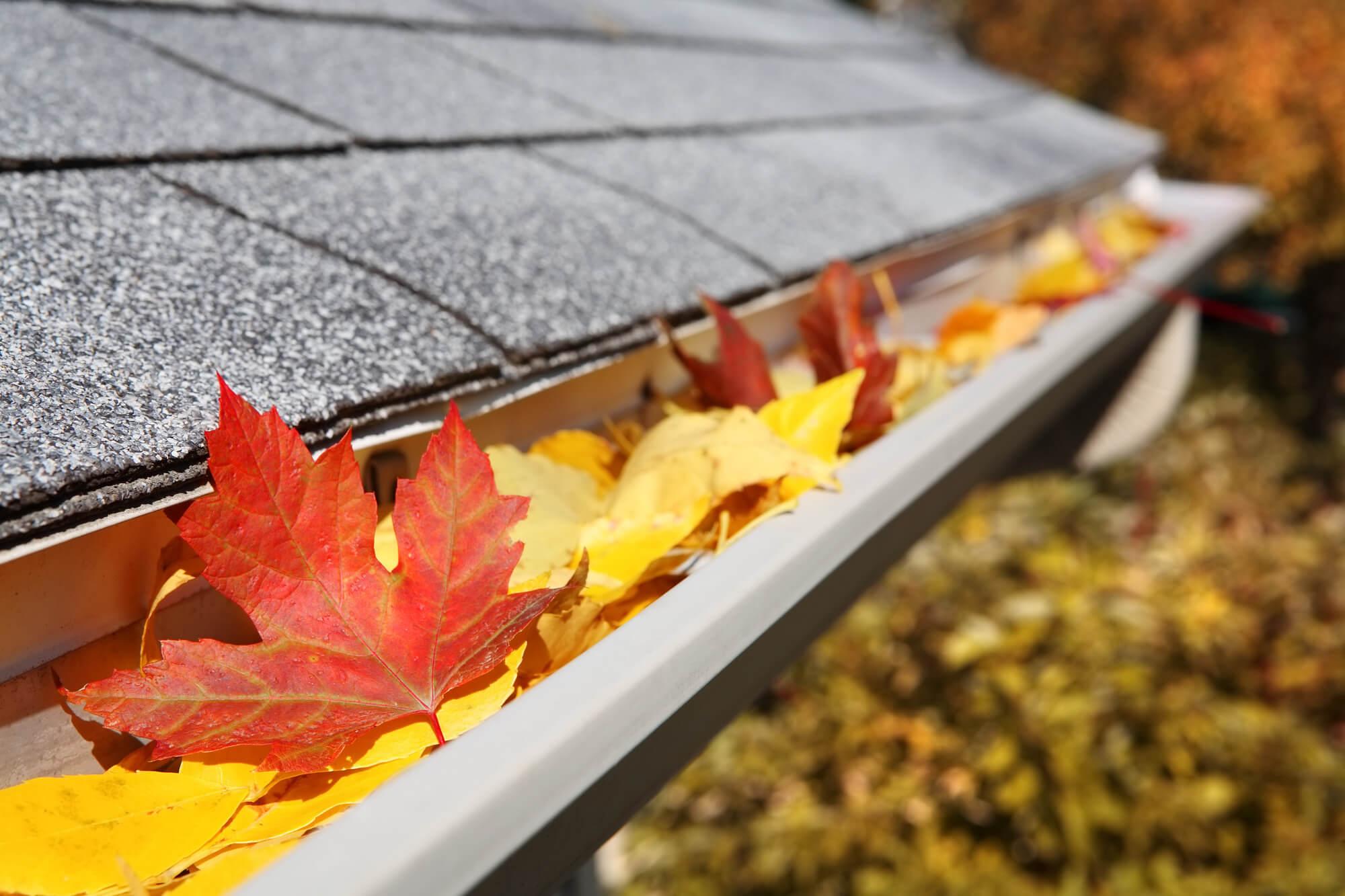 Roof maintenance,