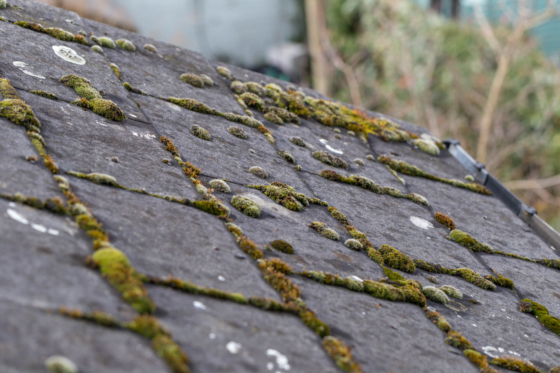 Moss Growing On A Roof In Dallas-Fort Worth